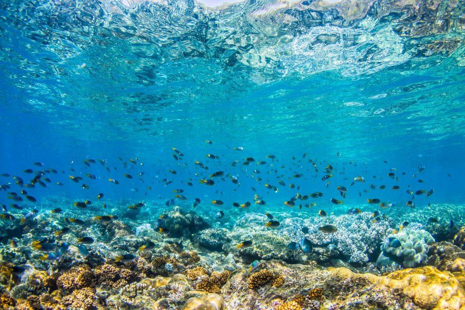 Coral Crossings