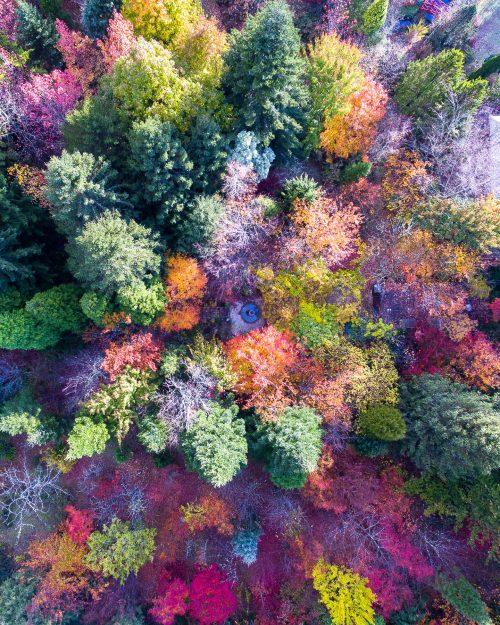 Nature's True Colours
