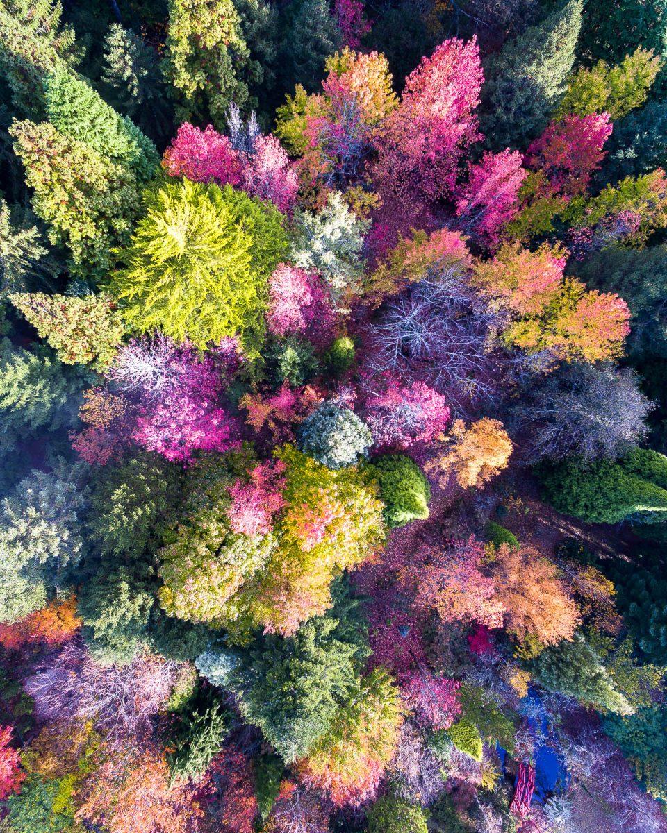 Fluorescent Forest