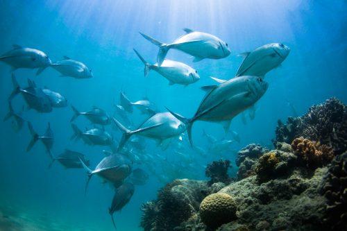 Langford Reef Locals