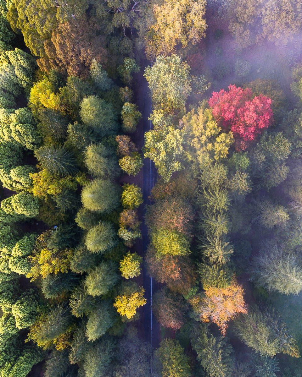 Autumn Palette-DJI_0011 5-960 x 1200