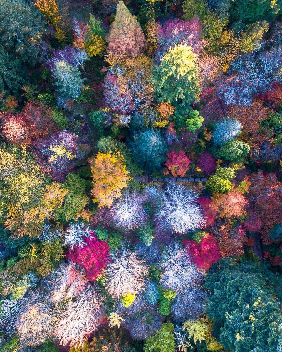 Autumn Palette-DJI_0033 1 (1)-960 x 1200