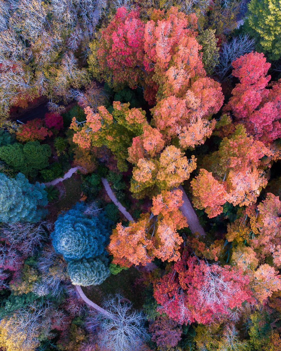 Autumn Palette-DJI_0058 2-960 x 1200