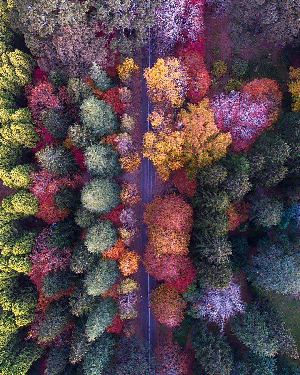 Autumn Palette-DJI_0110 (1)-960 x 1200