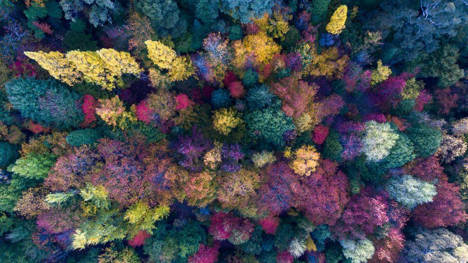Autumn Palette-DJI_0112-1200 x 675