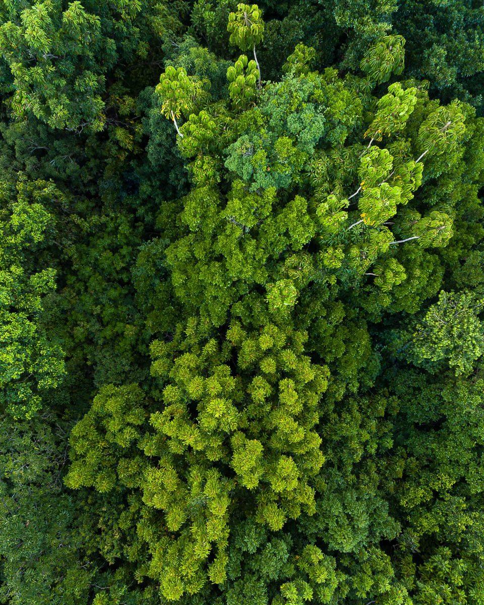 Great Barrier Reef-DJI_0149 2-960 x 1200