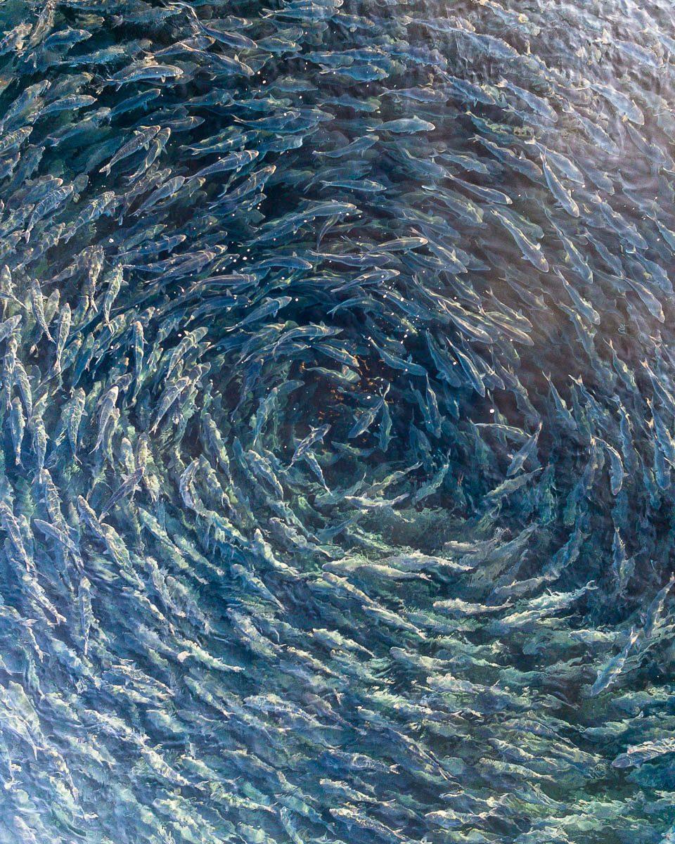Marine Life-DJI_0014 2-960 x 1200