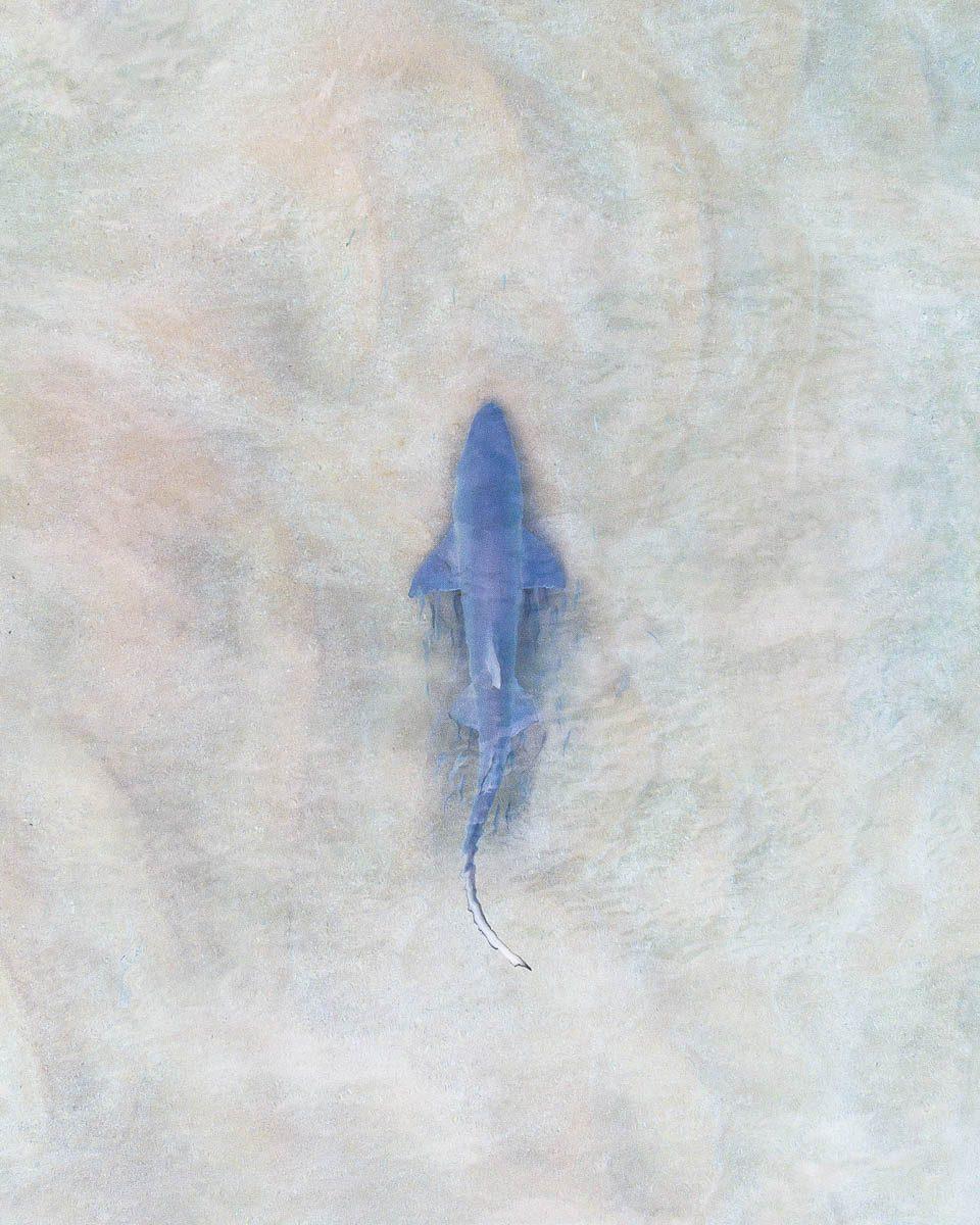 Marine Life-DJI_0060 1-960 x 1200