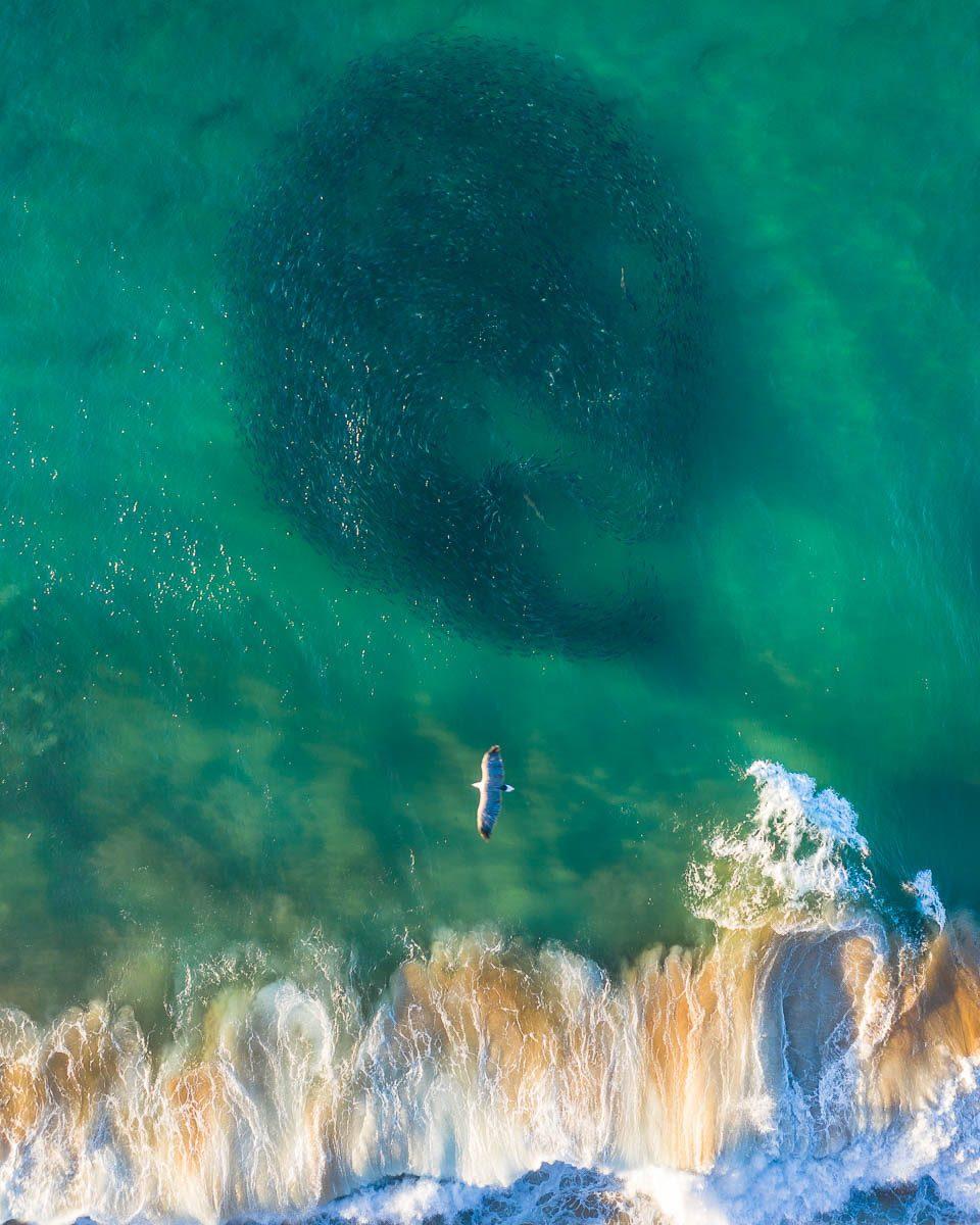 Marine Life-DJI_0212-960 x 1200